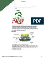 Lección 28.pdf