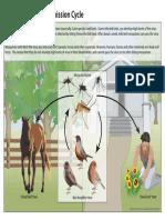 13 240124 West Nile Lifecycle Birds Plainlanguage 508