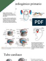 embriologia sistema cardiovascular