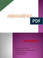 Perete abdominal (2)