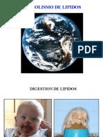 Lípidos 1