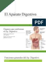 Fisiología del Ap. Digestivo