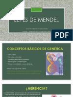 Leyes de Mendel (1).pdf