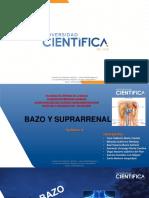 9. BAZO Y SUPRARRENAL (3)