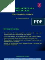 Diferenciacion Celulas Proca y Euca1