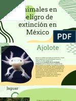 Animales en Peligro de Extinción en México