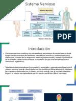 Modulo 1 Sistema nervioso Diapos