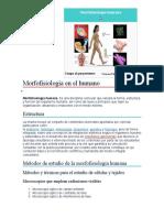 morfofisiologia en el humano.docx