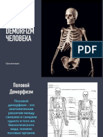 Половой Деморфизм костей черепа