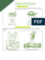 Artigos, Contrações e Verbos Ser, Ter e Estar, família.pdf