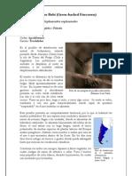 Picaflor Rubi (Sephanoides sephanoides)