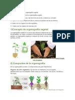 Trabajo Produccion Vegetal2