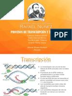 TRNSCRIPCION Y  TRADUCCION CELUAR-BILOGICA TEORIA
