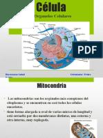 Presentación Organelos Celulares (2)