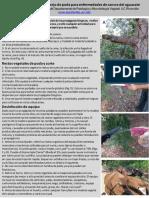 3. Poda para Enfermedades de Cancro del Aguacate (9).pdf