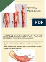 sistema muscular 2020 atualizado