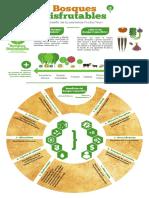 Infografías Bosque Comestible