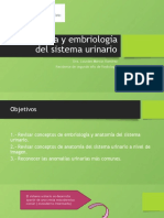 Anatomía y embriología del sistema urinario