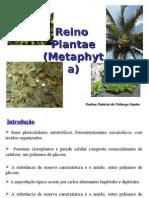 Sistemática Vegetal 3