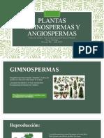 PLANTAS GIMNOSPERMAS Y ANGIOSPERMAS.pptx