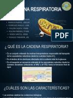 CADENA RESPIRATORIA F.pptx
