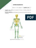 Sistema esqueletico, tegumentario, respiratorio y reproductor (1)
