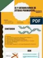 sintesis y degradación de nucleotidos