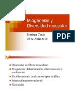 miogenesis tipos de fibra