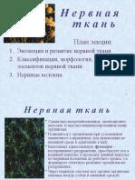Презантация с сайта www.skachat-prezentaciju-besplatno.ru - 01300205