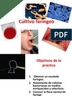 Cultivo faringeo1