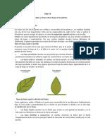 clasificación de las hojas