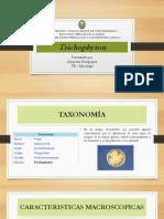 trichophyton.pdf