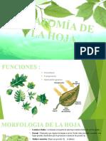 ANATOMÍA DE LA HOJA.pptx