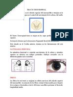 TRACTO TESTOESPINAL-inf (2)