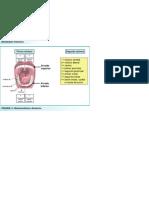tabla patologias orales