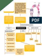 Reaplicación de ADN mapa conceptual.docx