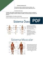 sistema ostemuscular