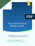 ATLAS DE HONGOS IMPORTANTE