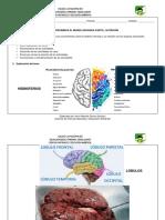 Guía Virtual 4. Sistema Nervioso, Nutrición (CON EVALUACIÓN) (1).pdf