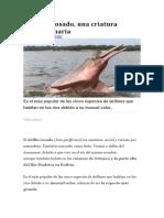 El delfín rosado.pdf
