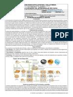 Guía 3 (III Periodo) Biología
