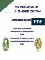 3-clasificacion-neumonias.pdf