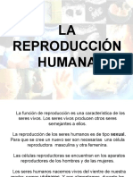 Reproduccion humana II