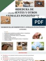 MORDEDURA DE SERPIENTES Y OTROS ANIMELES PONZOÑOSOS.pptx
