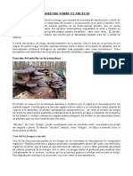 APRENDE SOBRE EL MICELIO.pdf