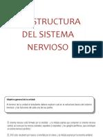 clase sistema nervioso.pdf