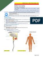 1. Identificando organos del sistema nervioso S2A.docx