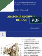 Anatomia_globului_ocular-16688.ppsx