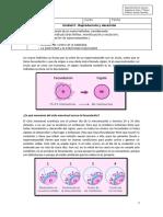 Guia n° 9-  7° Básico - Reproduccion humana- formacion de un nuevo individuo.-convertido.docx