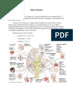 5. nervii cranieni
